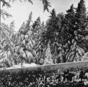 nevicata-dic804.jpg